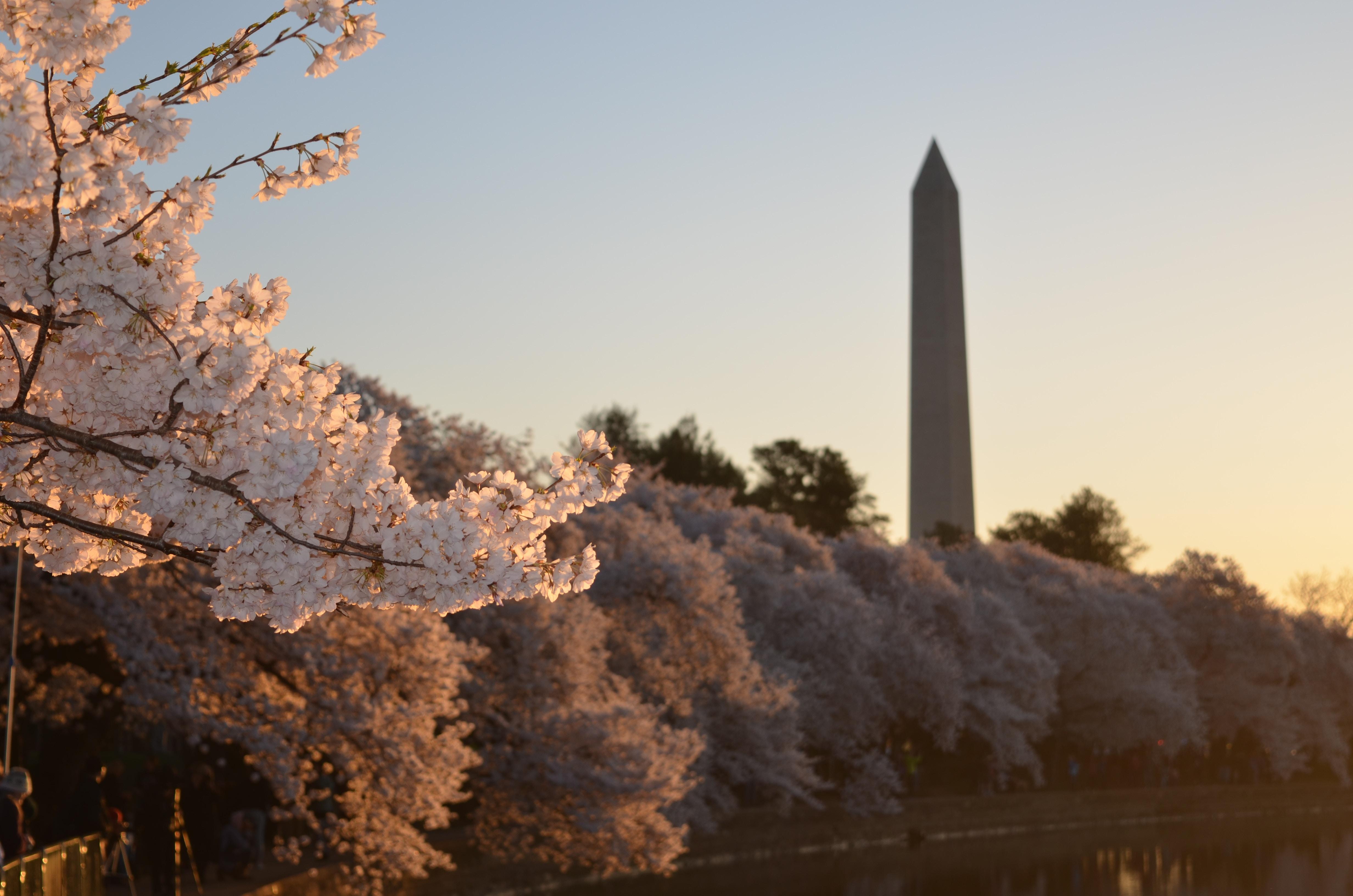 Washington_-DC-Washington-Memorial